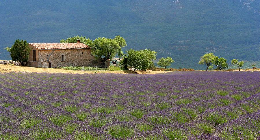 Landscape_Provence_France_1