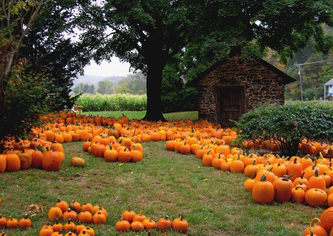 Visit a Pumpkin Patch|classictasselsandmore.com