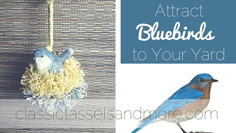 Attract Bluebirds to Your Yard with This One Simple Tip|classictasselsandmore.com (1)