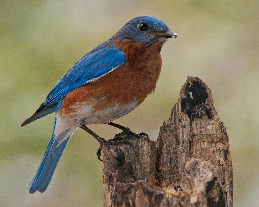 birds-1232411_1280