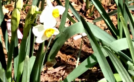 Signs of Spring1|classictasselsandmore.com